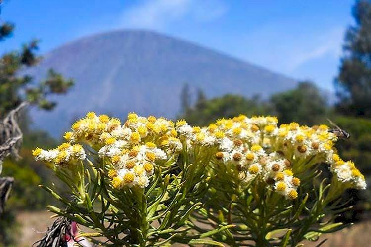 Viral Sekelompok Pendaki Petik Edelweiss di Gunung Buthak, Begini Setelah Ditegur