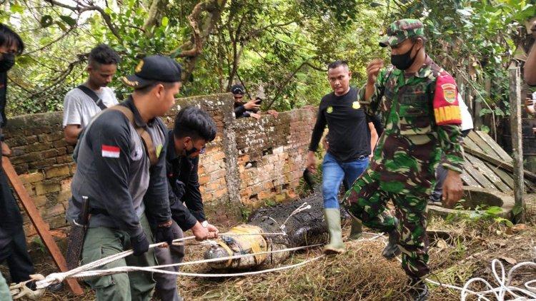 BKSDA Jambi Evakuasi Puluhan Buaya yang Lepas di Sungai Gelam Muarojambi