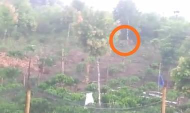 GEGER! Harimau Berkeliaran di Ladang Milik Warga Batang Merangin Kerinci