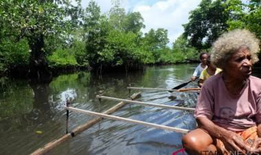 Mencicip Aibon Sumber Karbohidrat Dari Tanah Papua