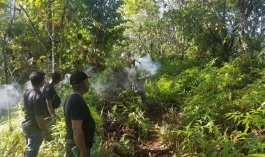 Gajah Liar Mengamuk, Ribuan Batang Tanaman Rusak di Aceh Utara