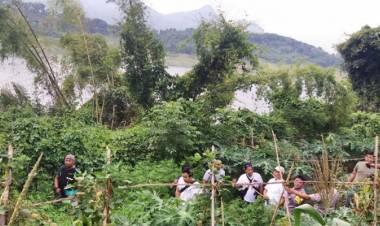 Ada Ladang Ganja 1,5 Hektar di Purwakarta…