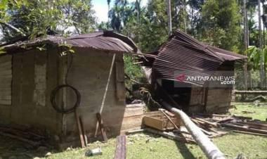 12 Ekor Gajah Mengamuk Rusak Rumah Warga di Nagan Raya Aceh