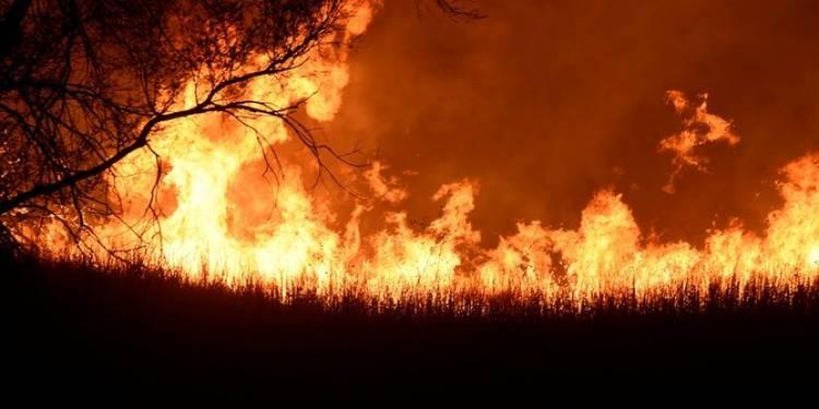 Hutan seluas 4 hektare milik Perhutani di Ponorog terbakar