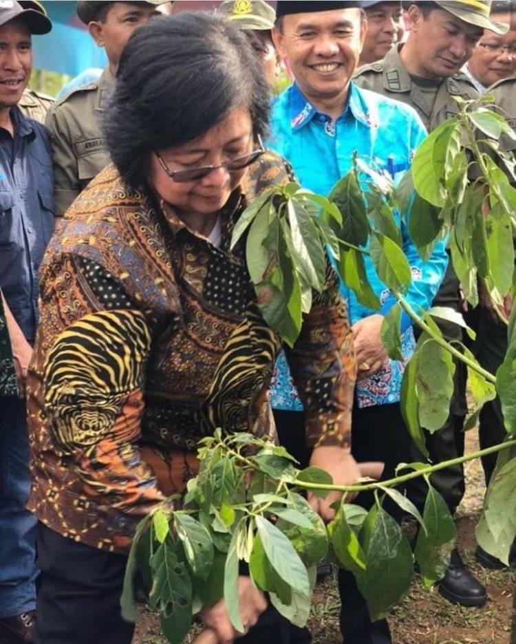 Perambahan Hutan di Jambi Sulit Dibasmi, Menteri Siti Nurbaya Lakukan Ini