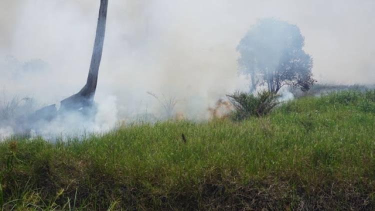 Perkumpulan Hijau Temukan Kebakaran di Wilayah Lindung Gambut Tanjab Barat