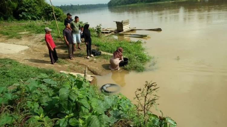 Ritual Darah Kerbau Dibuang ke Sungai, Buaya Ganas di Tebo Langsung Muncul