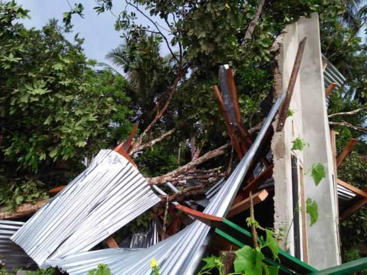 BREAKING NEWS!! Di Bungo, Rumah Bantuan Pemerintah Hancur Ditimpa Pohon Bedaro