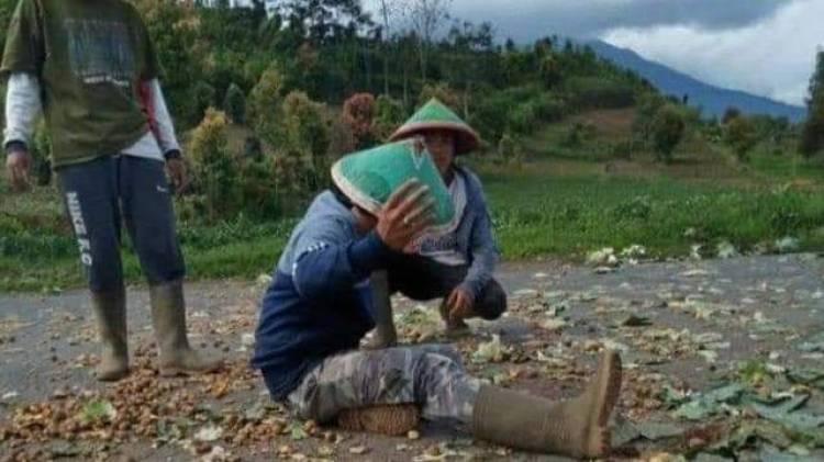 Lapor Presiden Jokowi! Harga Terus Anjlok, Petani Kerinci Buang Sayuran Hasil Panen