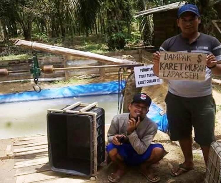 Pak Jokowi, Harga Karet di Mesuji Jeblok Jadi Rp6.000 Per Kg