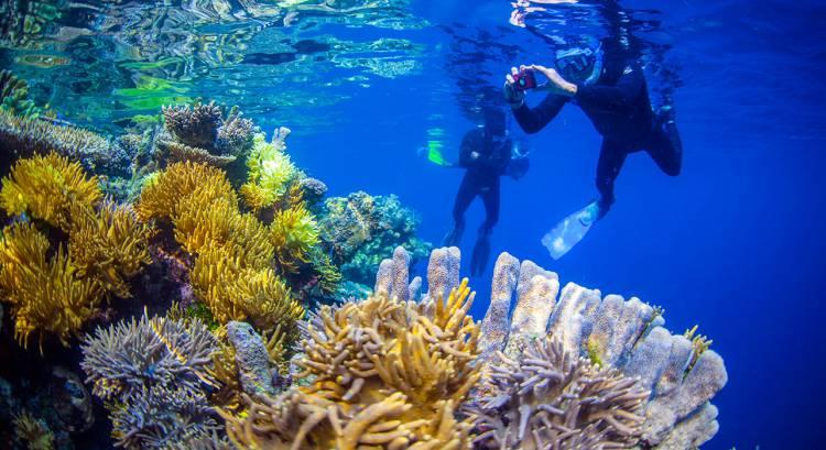 Lima Destinasi yang Disebut Surga Ikan Raja Ampat