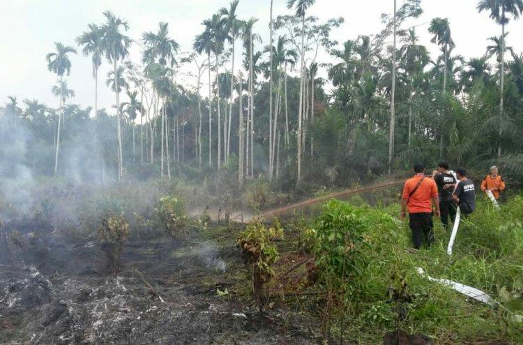 Kebakaran Lahan Terjadi di Senyerang Tanjab Barat