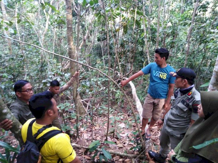 BKSDA Temukan Jejak Harimau di Muara Siau Merangin Ukuran Besar