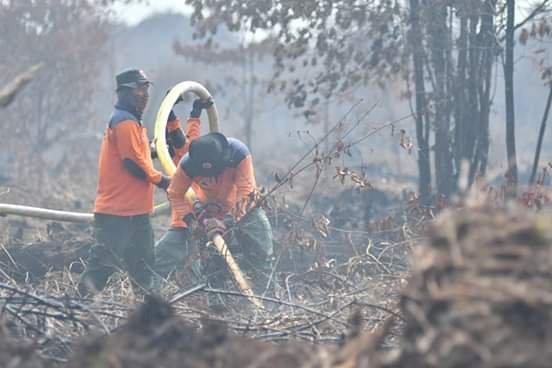 159 Hektar Lahan Terbakar, Ini Kawasan Darurat Karhutla di Muaro Jambi