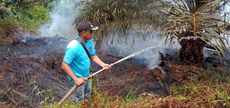 161,40 Hektar Hutan & Lahan Tanjab Barat Terbakar, BPBD: Lebih Dahsyat