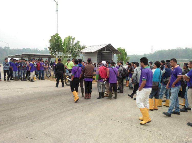 Ratusan Karyawan PT Star Rubber Bungo Mogok Kerja!